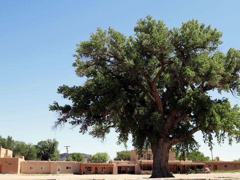 Tree1_800x600